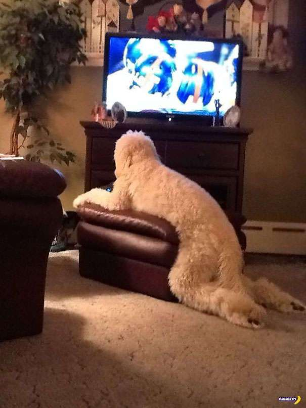 Собаки-удивляки