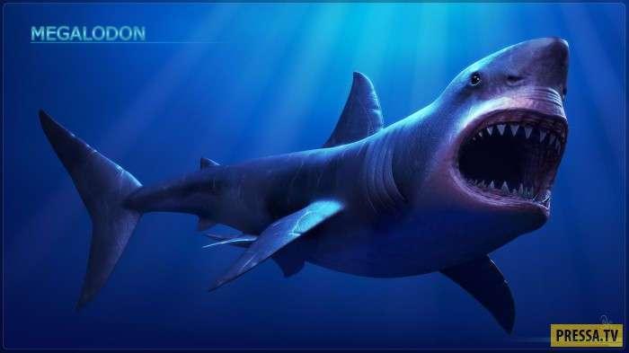 Мегалодон— самая знаменитая и ужасная акула древнего океана (18 фото+2 видео)