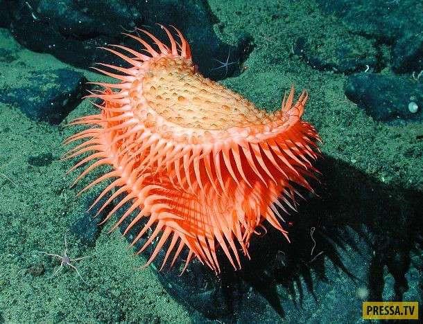 ТОП-15 жителей океана удивительной красоты (15 фото)