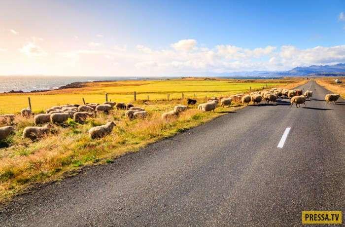 ТОП-10 удивительных национальных особенностей исландцев (9 фото)