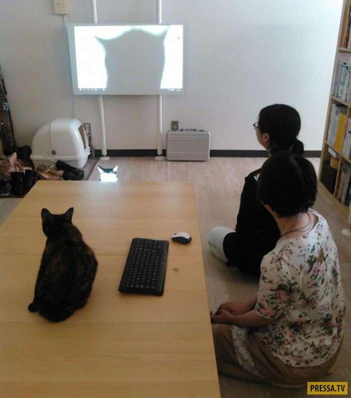 Японская IT-компания собирает кошек с улиц (12 фото)