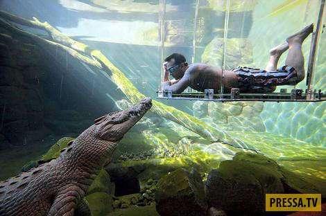 Парк в Австралии для любителей пощекотать нервы (9 фото)
