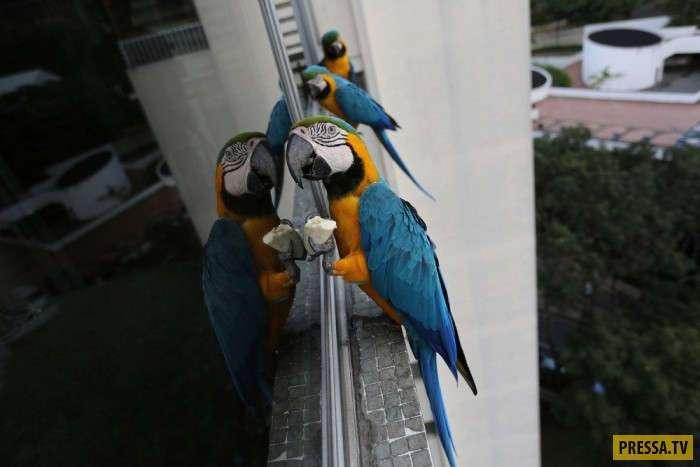 Венесуэльские голуби (8 фото)