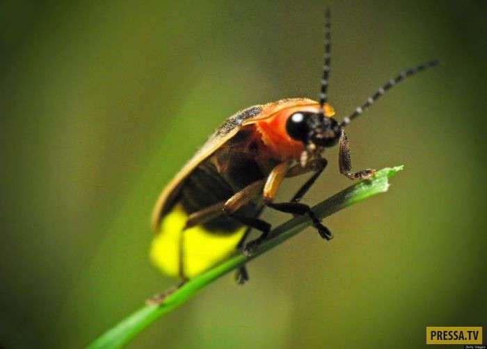 ТОП-10 насекомых с удивительными способностями (10 фото)
