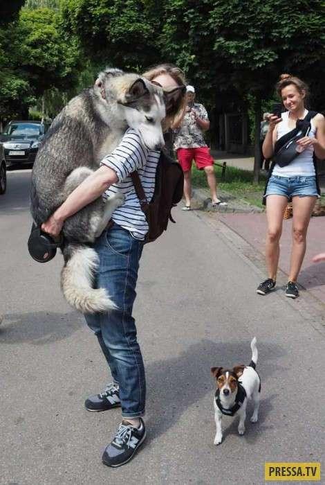 Забавные фотографии испугавшихся собачек (19 фото)