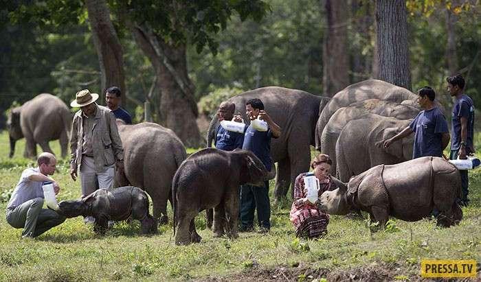 В Индии в национальном парке жёстко решили проблему с браконьерами (11 фото)