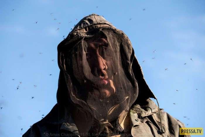 Черные копатели Сибири: охота на мамонтов (37 фото)