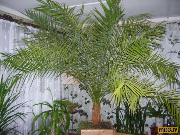 Пальмовые страсти