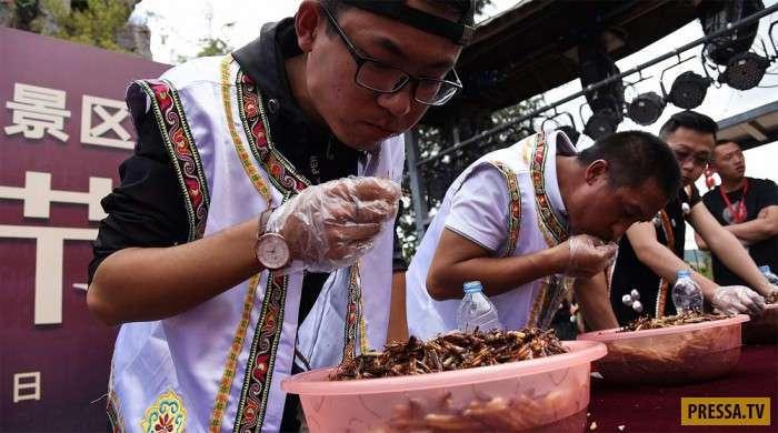 Конкурс по поеданию насекомых в Китае (13 фото)