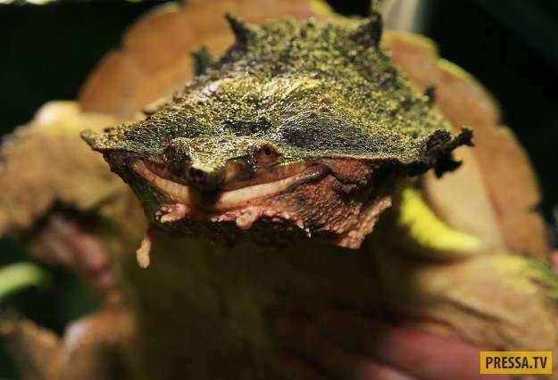 ТОП-23 существа в природе странного и ужасного вида (23 фото)