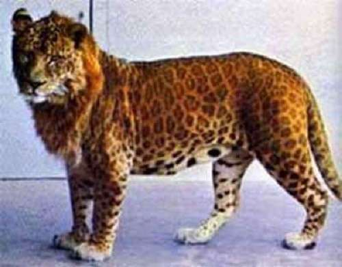 Невероятные животные-гибриды, о которых вы никогда не слышали