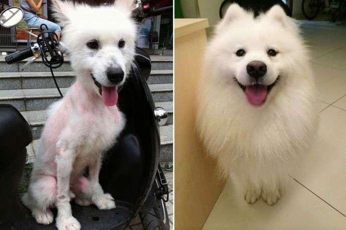 Девушка нашла на улице пса в плачевном состоянии и взяла к себе домой