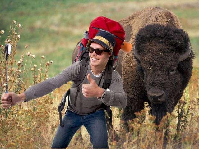 Идиотские вещи, которые люди вытворяли в национальных парках США