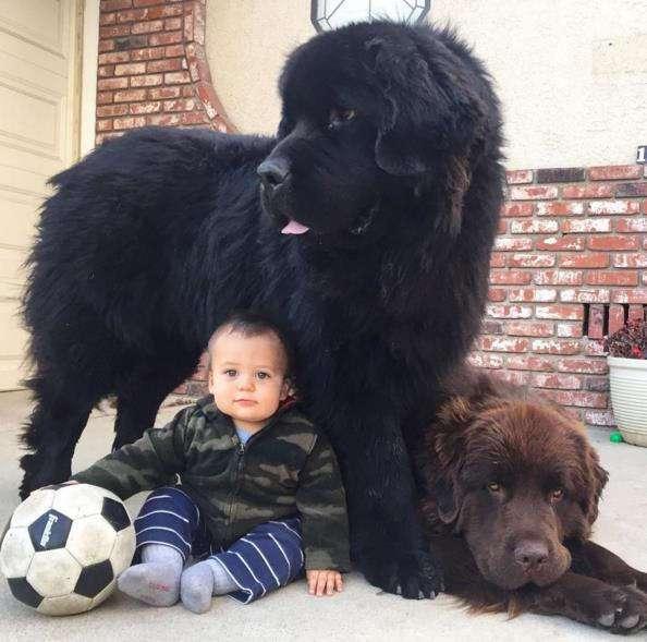 Они выглядят как обычные собаки, но когда они встали на лапы, я потеряла дар речи!