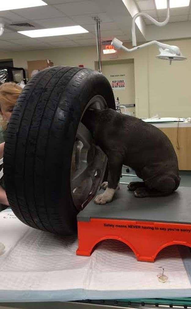 Бюрократия по-американски или как на самом деле сложно вызволить щенка из плена (9 фото)