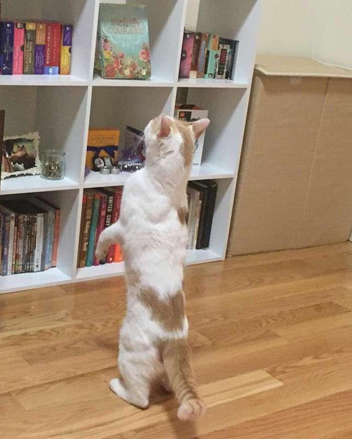Коты, которые сами нашли своих хозяев (43 фото)