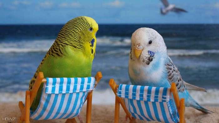 Птица-говорун. Как выбрать попугая и научить его говорить (8 фото)