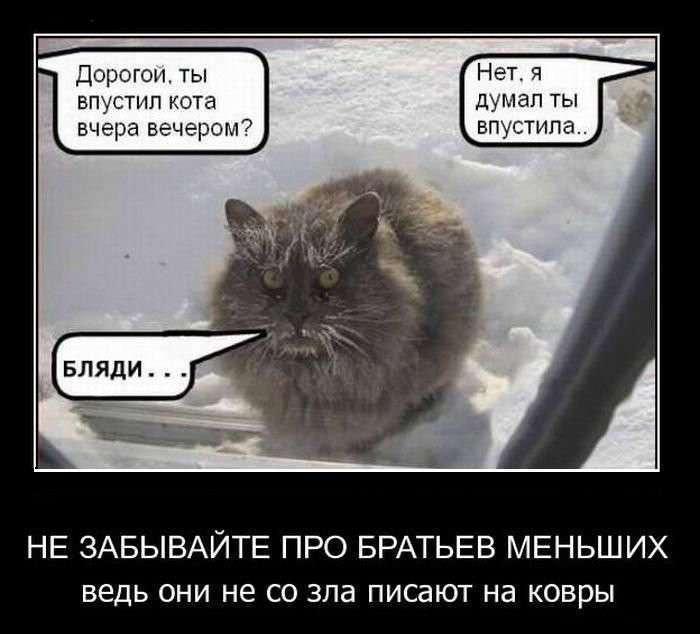 Кот простыл (5 фото)