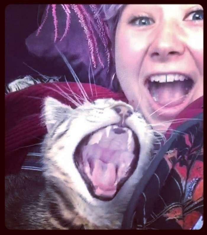 То ли зёв, то ли рёв. Зевающие котики — это страшнее, чем кажется (27 фото)