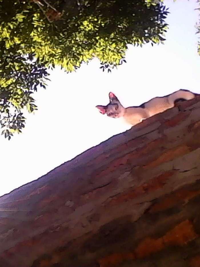 Она каждое утро бежала и встречала меня на стройке (5 фото)