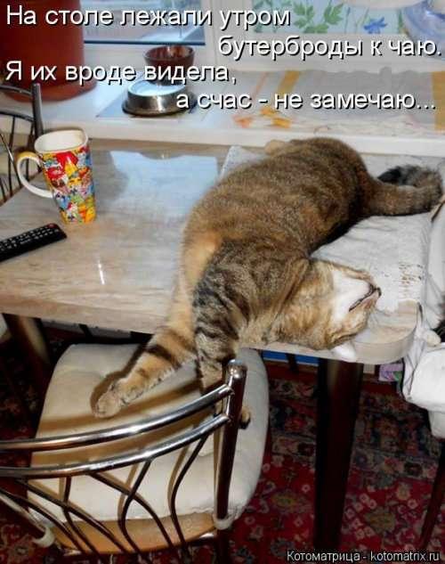 Свежая котоматрица (26 фото)