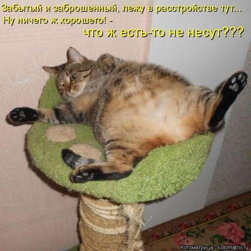 Свежая котоматрица (24 фото)