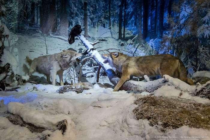 Музей Природы в Беловежской пуще (19 фото)