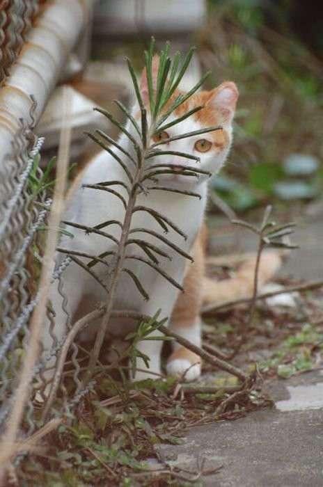 В засаде (20 фото)