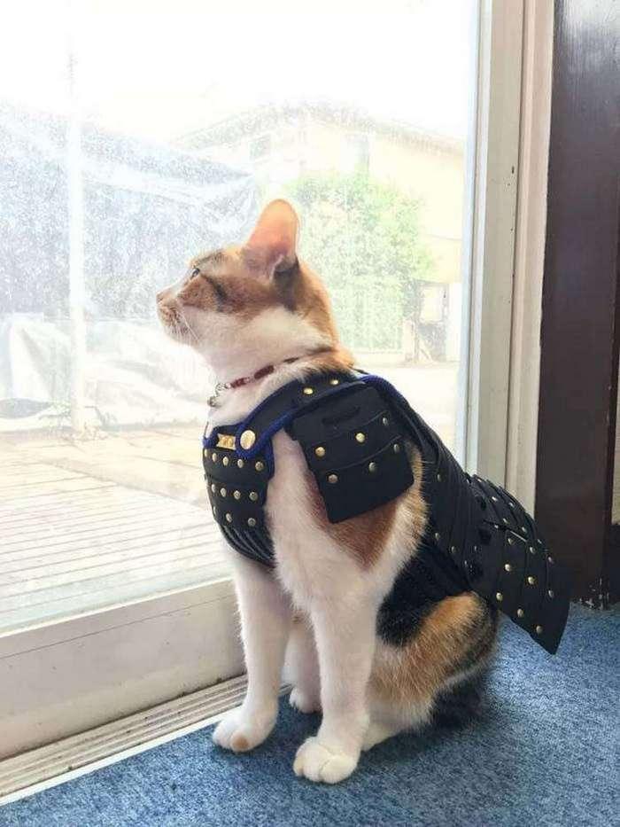 Одна компания из Японии создает самурайскую броню для кошек и собак (8 фото)