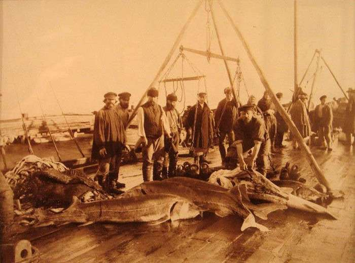 Классные исторические раритеты,фотоснимки событий (43 фото)