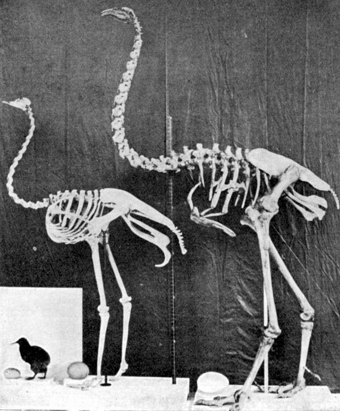 Животные, которых больше не существует по вине человека (16 фото)
