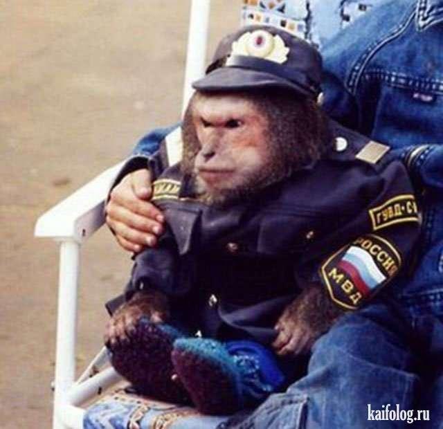 Приколы про полицию и животных (40 фото)
