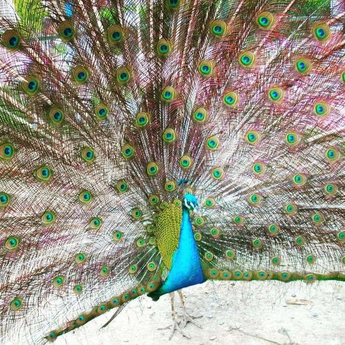 15 доказательств того, что природа — тот еще перфекционист (19 фото)