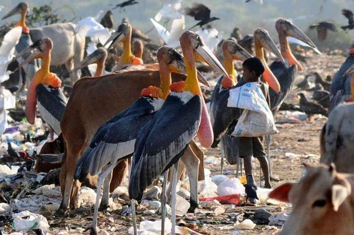 Правда или вымысел: 15 животных-гигантов (16 фото)