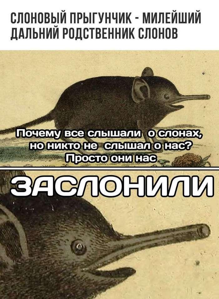 Подборка смешных забавных картинок из Интернета (42 фото)