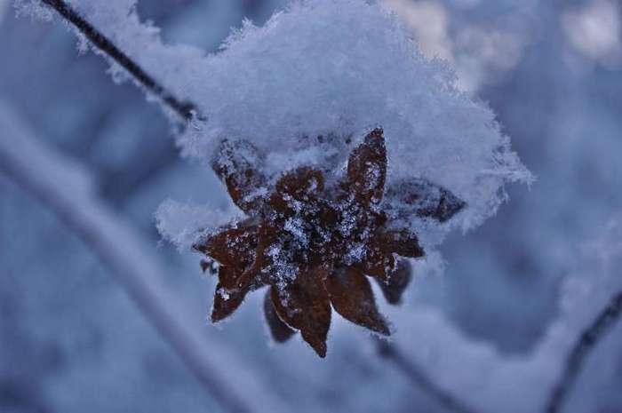 Костомукша - жемчужина Карелии (51 фото)