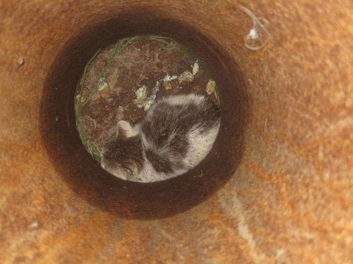 В Челябинске ради спасения котёнка демонтировали фонарный столб (4 фото)