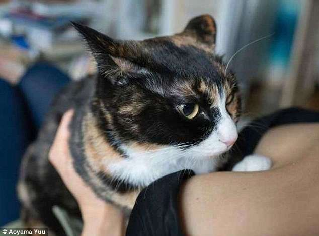 -Котики и груди-: Японец выпустил эротический фотоальбом с терапевтическим эффектом (11 фото)