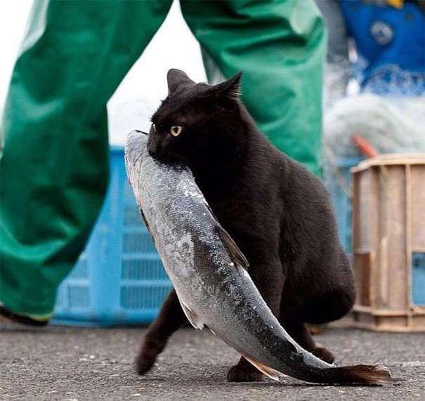 Уморительные коты-воришки, которых поймали с поличным (32 фото)