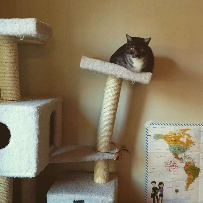 Кошки - хозяева в доме (15 фото)