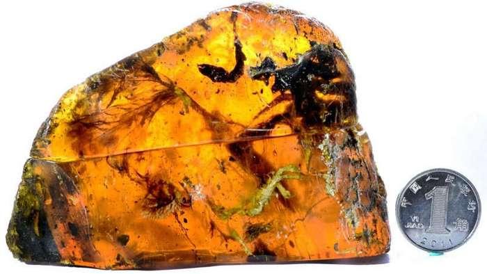 Ученые нашли янтарь с останками птенца возрастом 100 млн лет (4 фото)