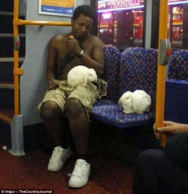 Эти безумцы ездят вместе с вами в общественном транспорте! (25 фото)