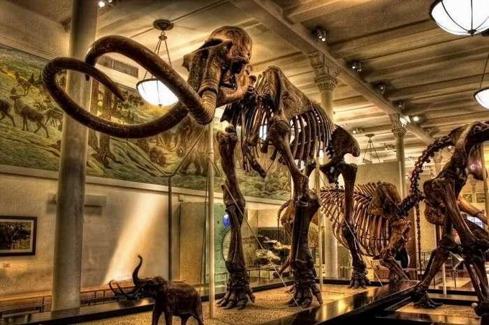 Американский музей естественной истории (7 фото)