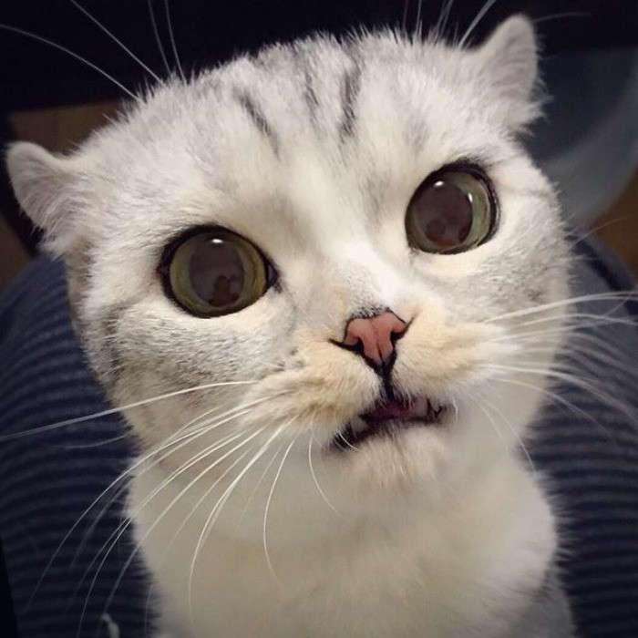 Хана – кошка с невероятно большими глазами (14 фото)