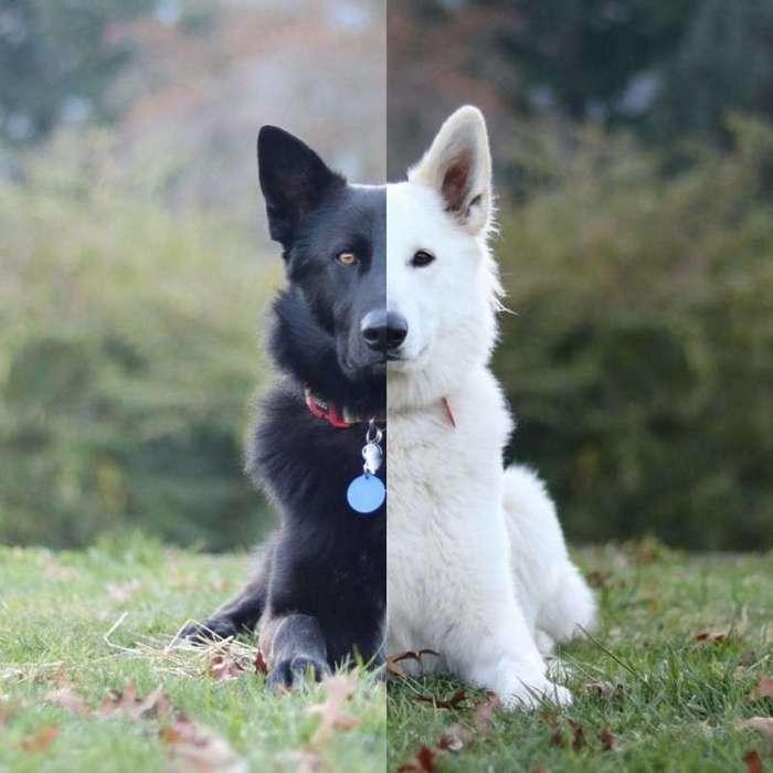 Эти две собаки, олицетворяющие день и ночь, непременно сделают ваш день добрым! (14 фото)