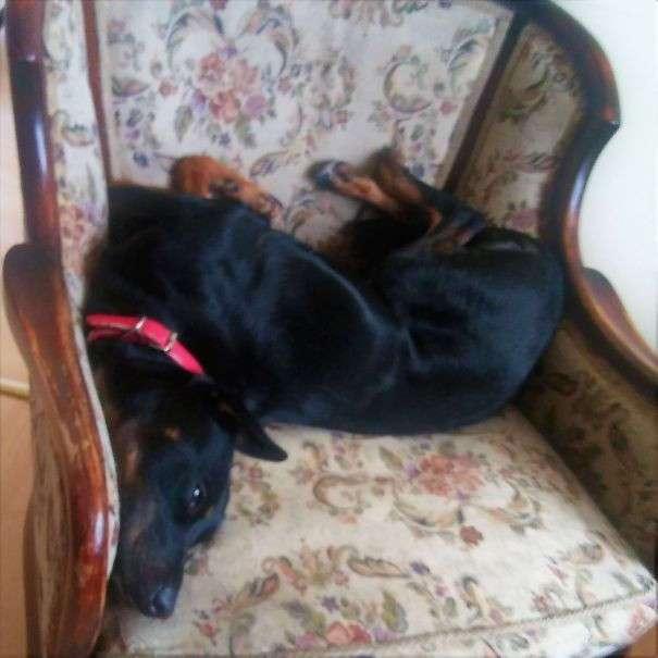 Самые смешные собаки (42 фото)