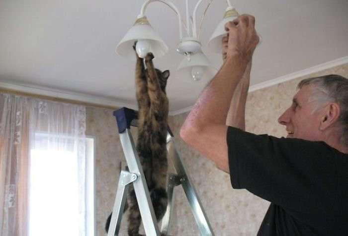 А коты не так просты (31 фото)