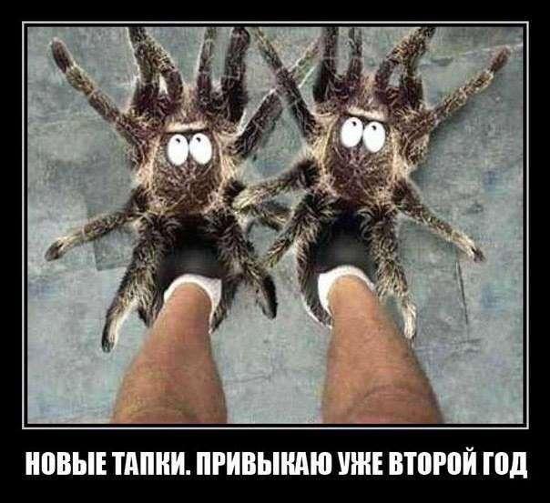 Подборка прикольных картинок из паутины (40 фото)