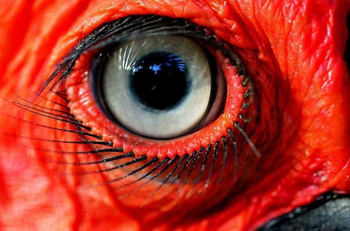 Хлопай ресницами: 17 невероятных фотографий, на которых запечатлены ресницы разных животных (18 фото)
