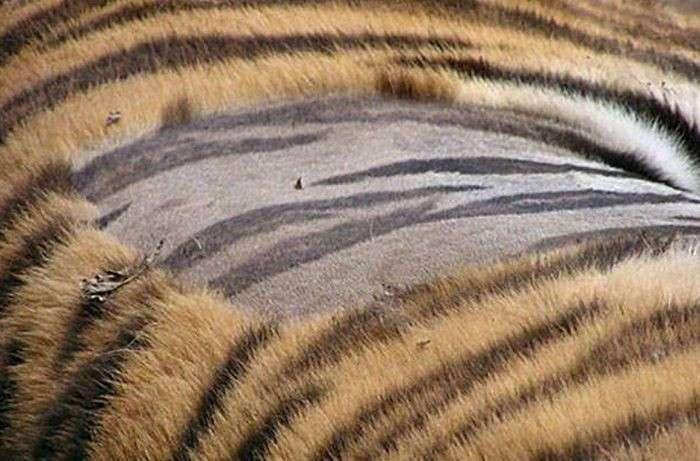 Ученые издеваются над большими кошками, чтобы доказать прописную истину (16 фото)